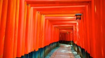 Fushimi inari shrine 45829